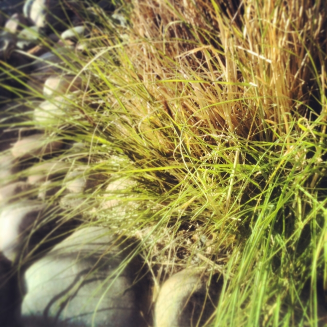 bushes3